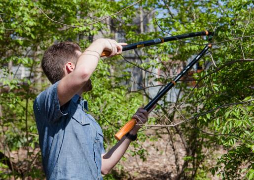 hombre con herramientas para jardinería podando ramas de árboles